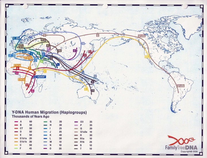 Haplogroups